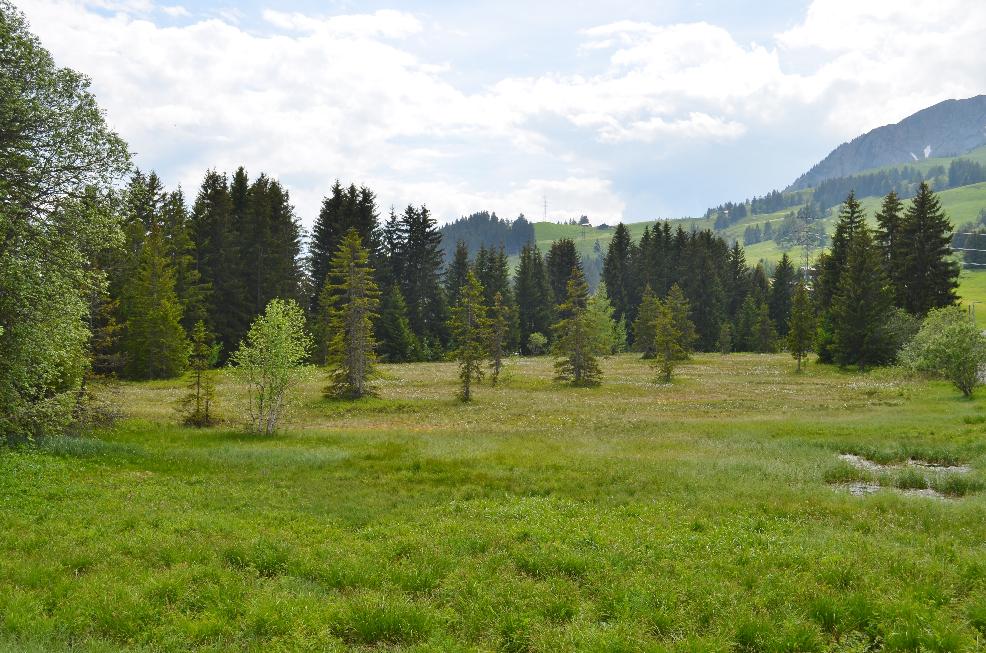Visite de quelques sites de Sarracenia Sarra9_zpsiv0ntb1k