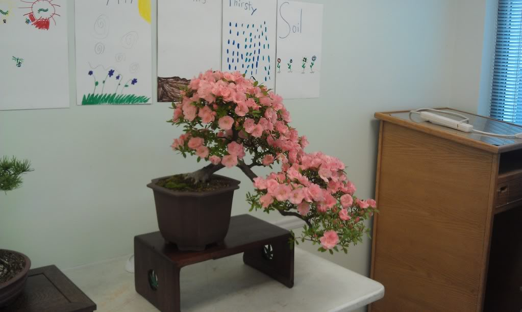 Mi primer visita aun club de bonsai IMAG0172