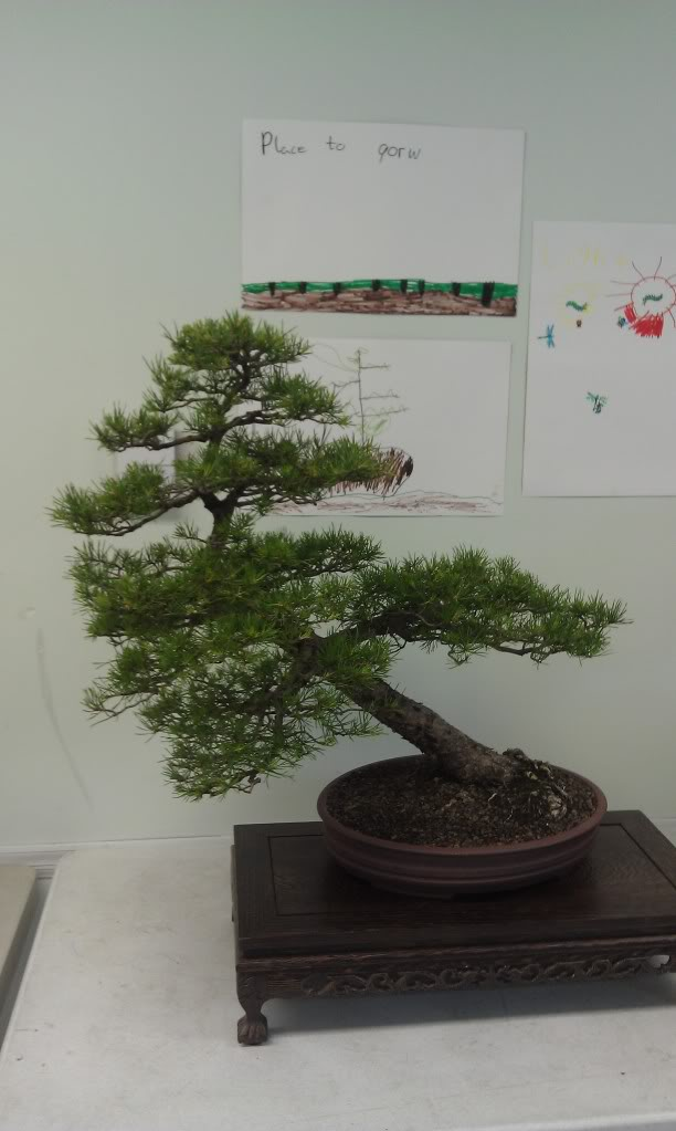Mi primer visita aun club de bonsai IMAG0173