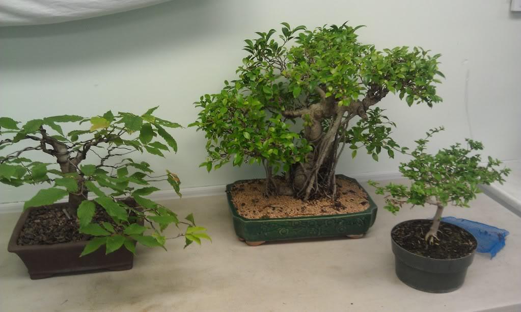 Mi primer visita aun club de bonsai IMAG0174