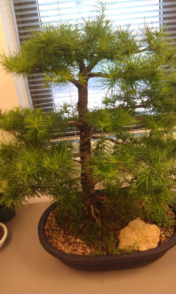 Mi primer visita aun club de bonsai IMAG0176
