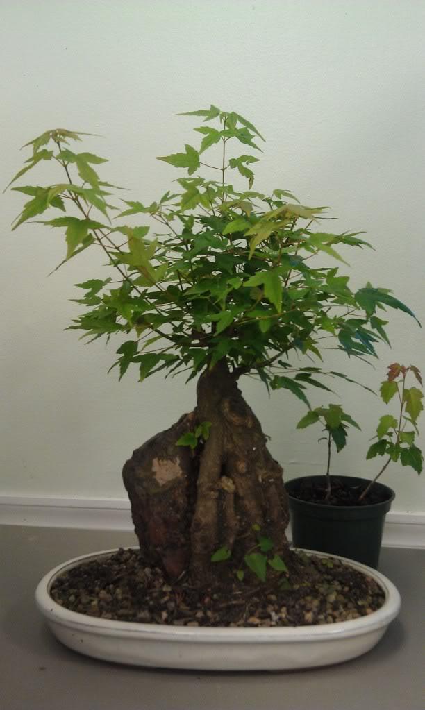Mi primer visita aun club de bonsai IMAG0177