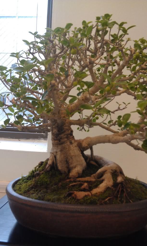 Mi primer visita aun club de bonsai IMAG0181