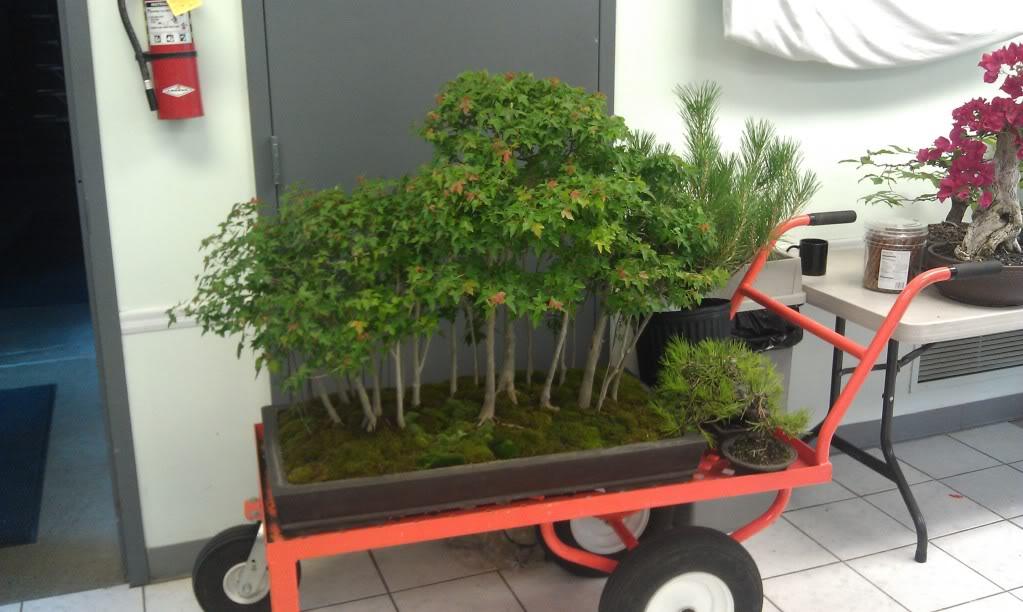 Mi primer visita aun club de bonsai IMAG0184