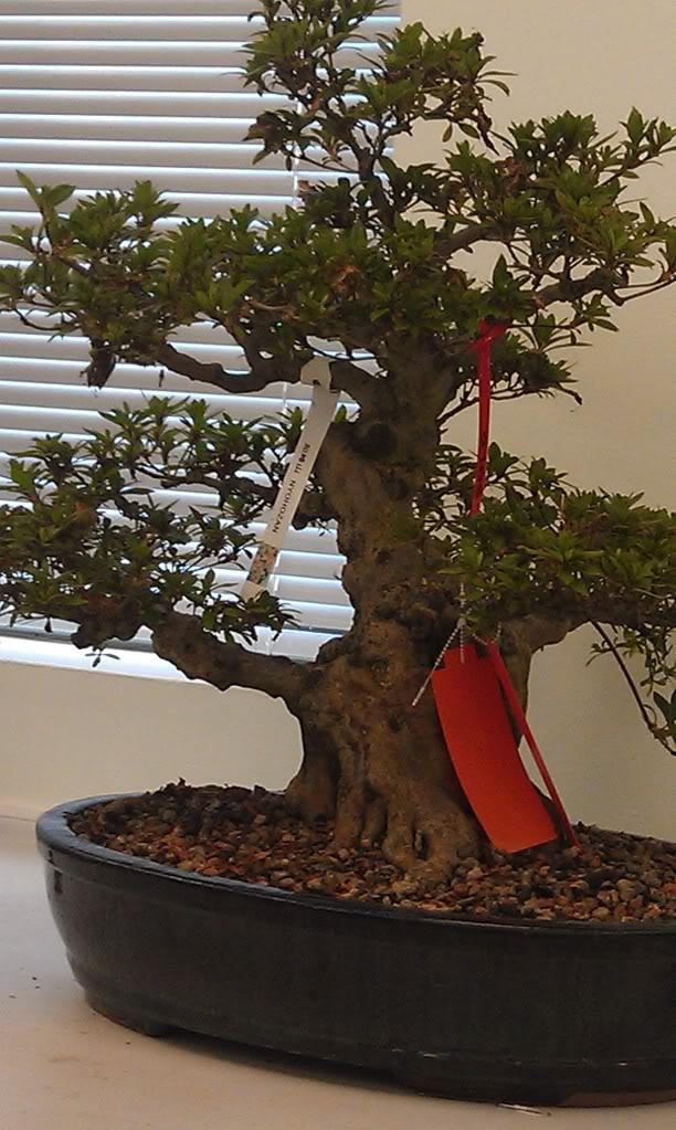 Mi primer visita aun club de bonsai IMAG0187