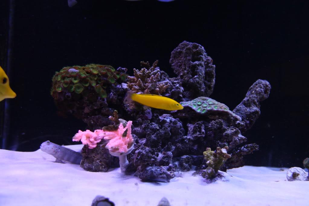 Iwagumi Reef IMG_3467