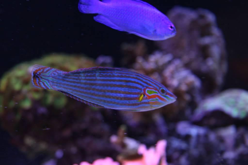 Iwagumi Reef IMG_3477