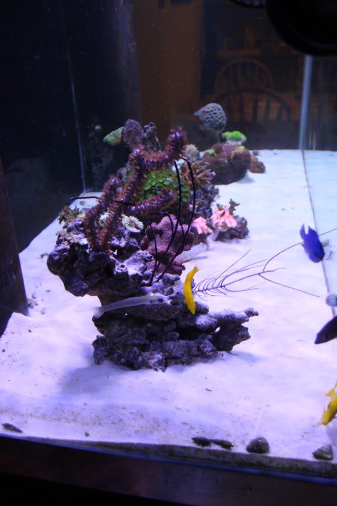 Iwagumi Reef IMG_3480