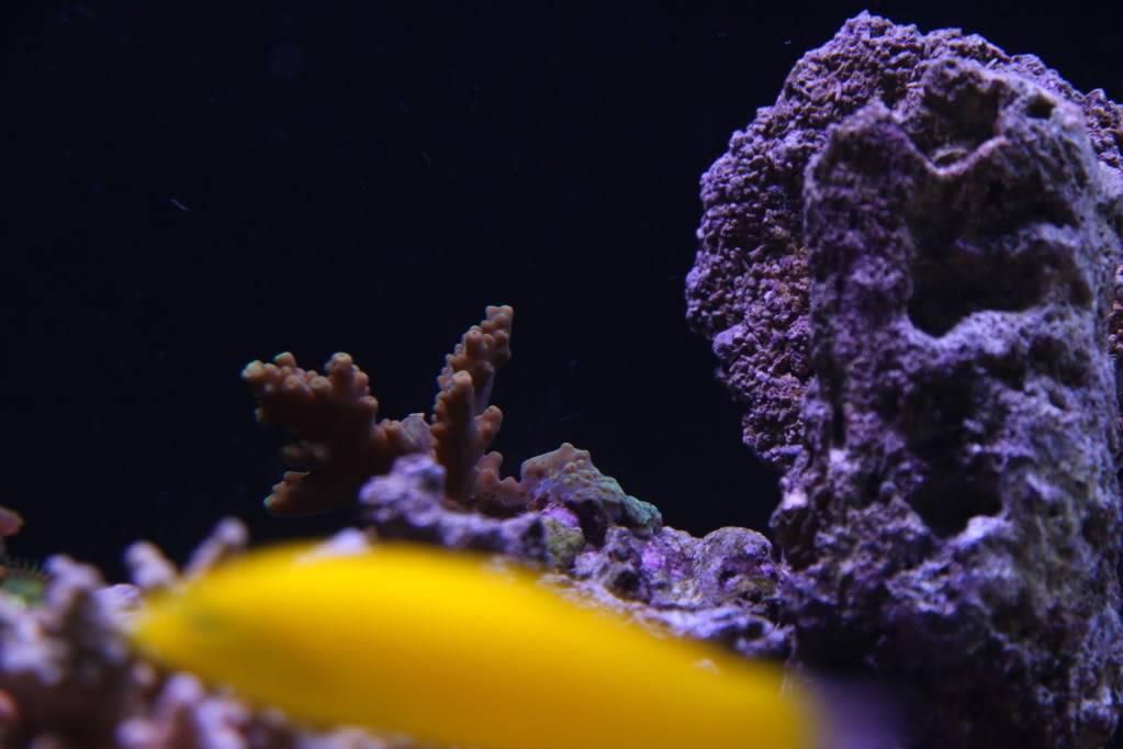 Iwagumi Reef IMG_3487