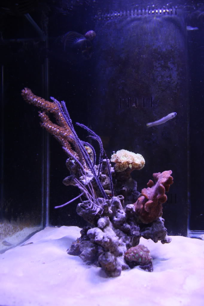 Iwagumi Reef IMG_3493