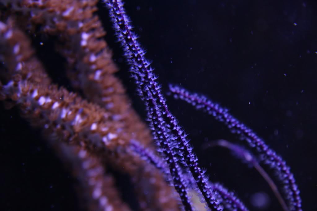 Iwagumi Reef IMG_3495
