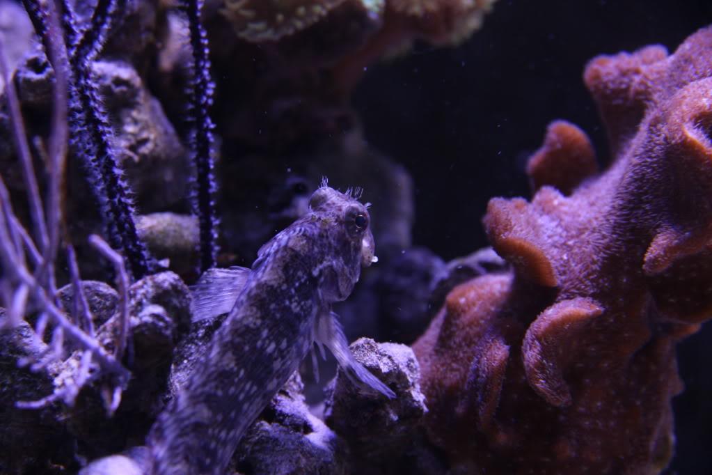 Iwagumi Reef IMG_3498
