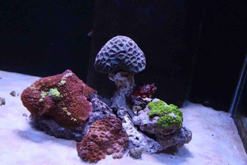 Iwagumi Reef IMG_3503