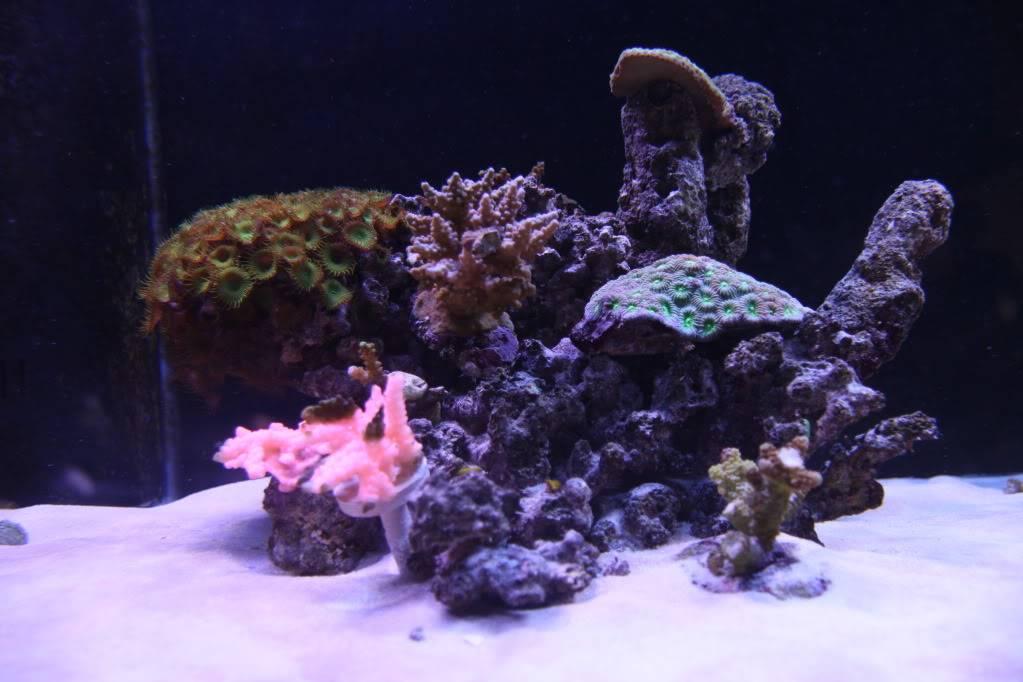 Iwagumi Reef IMG_3510