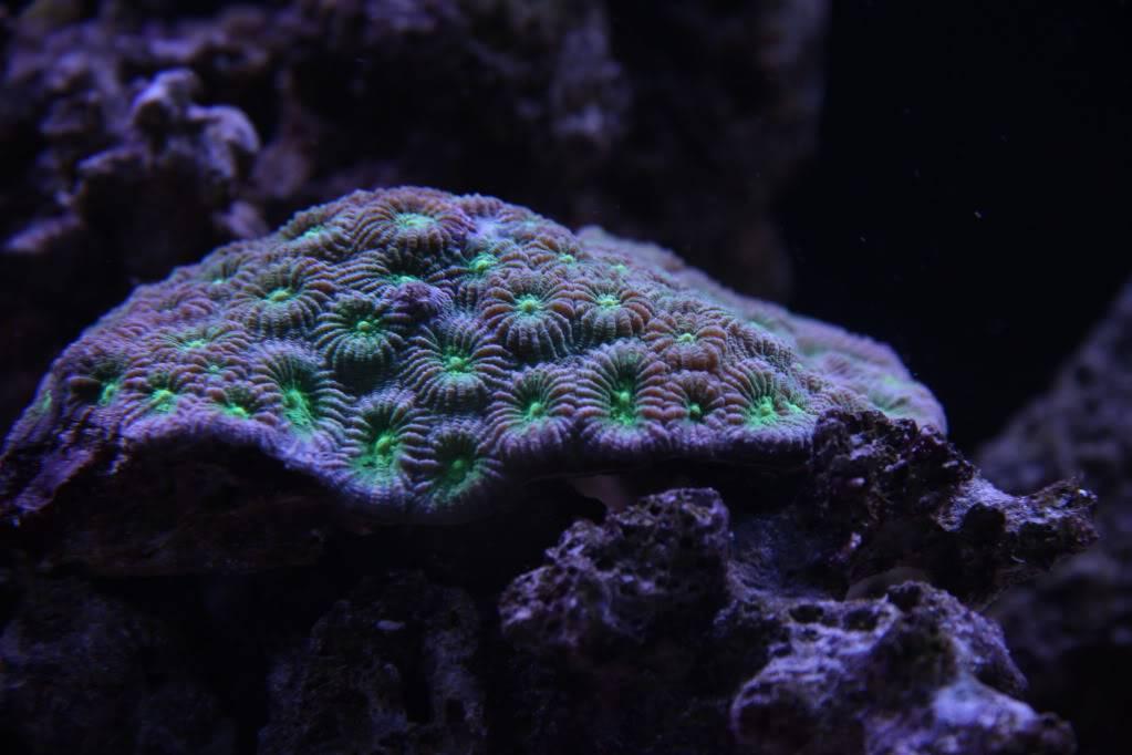 Iwagumi Reef IMG_3512