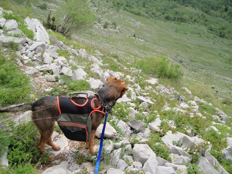 4 planinara,5 pari nogu,9 dana,114 km Velebita 10314499_10203910009061731_4346259087269235442_n_zps3eeeb022