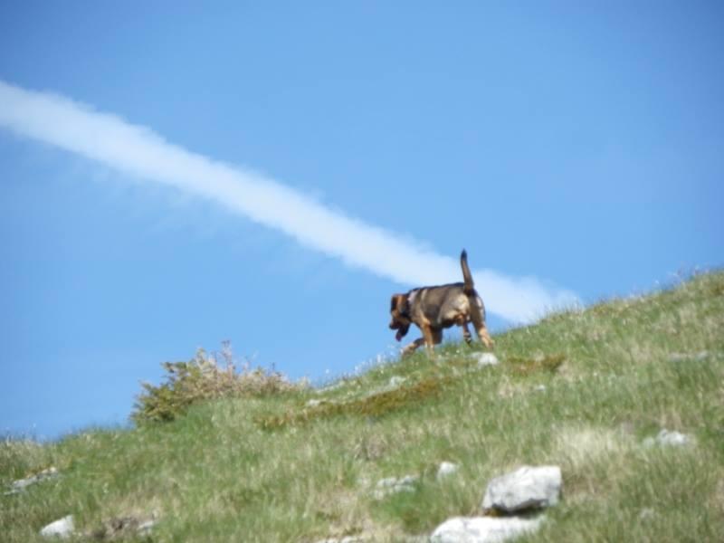4 planinara,5 pari nogu,9 dana,114 km Velebita 10325775_10203909997341438_4335886949572683759_n_zpsb1e72ca4