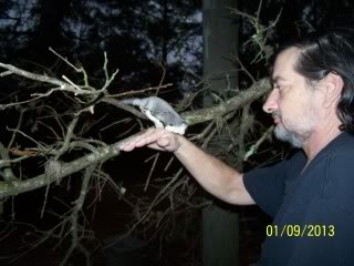 Definitions of sugar glider behaviors updated Buddyoutdoorswithdaddfirsttimein20131-9-13003