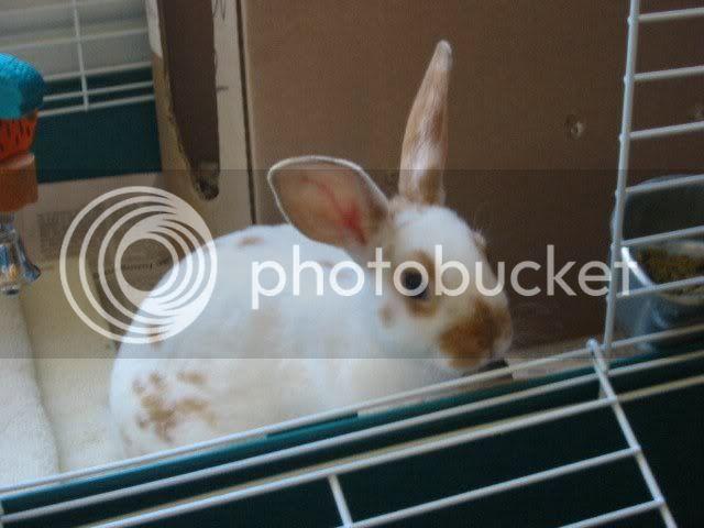 Your Pet Rabbits Juneau1