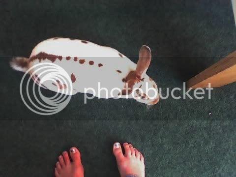 Your Pet Rabbits A1da32886b88