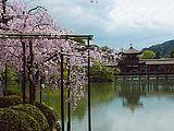 Hanami : la contemplation des fleurs Th_heian