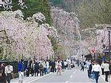 Hanami : la contemplation des fleurs Th_kakunodate