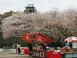 Hanami : la contemplation des fleurs Th_osakacastle