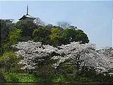 Hanami : la contemplation des fleurs Th_sankeien