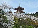 Hanami : la contemplation des fleurs Th_shrine
