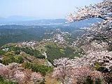 Hanami : la contemplation des fleurs Th_yoshinoyama