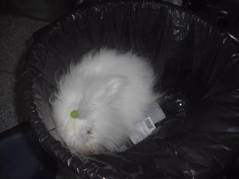El conejo basurero CIMG7839