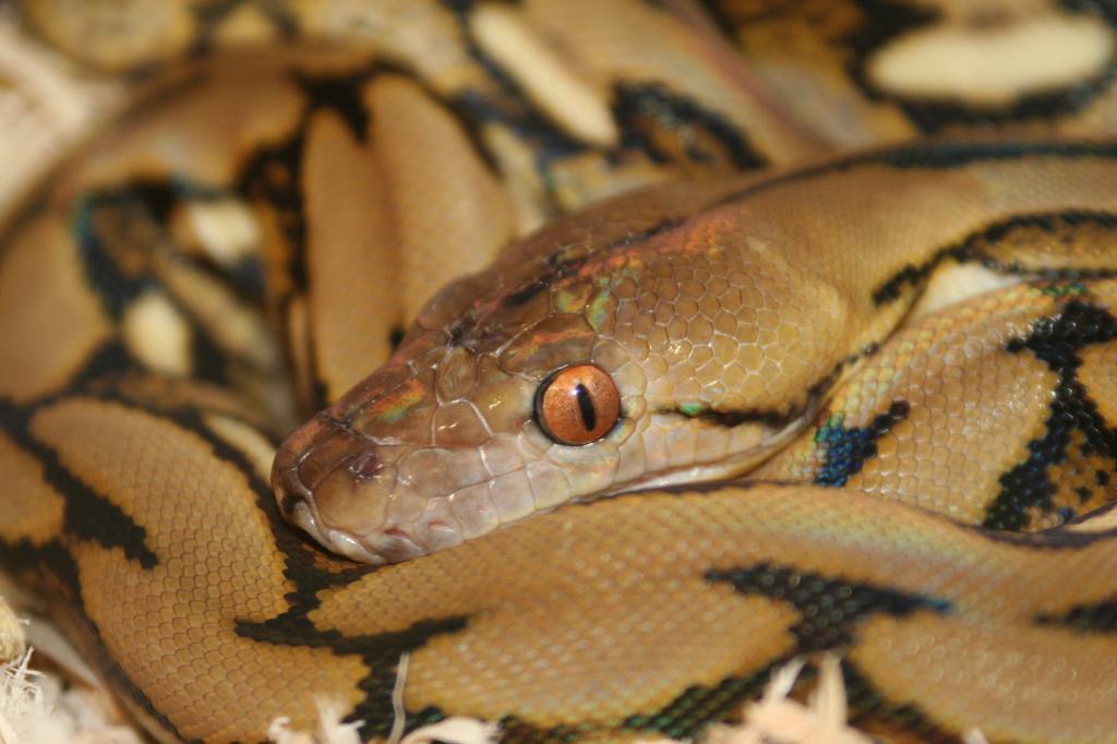 Virginia's Reptile and Amphibian Forum - Portal Fifi