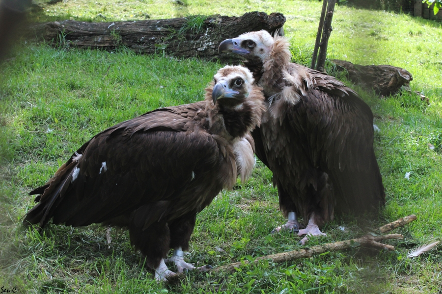 Pairi Daiza 2012 02-5