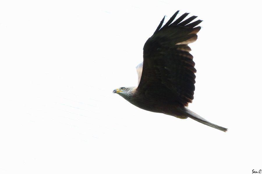 Pairi Daiza 2012 23-1
