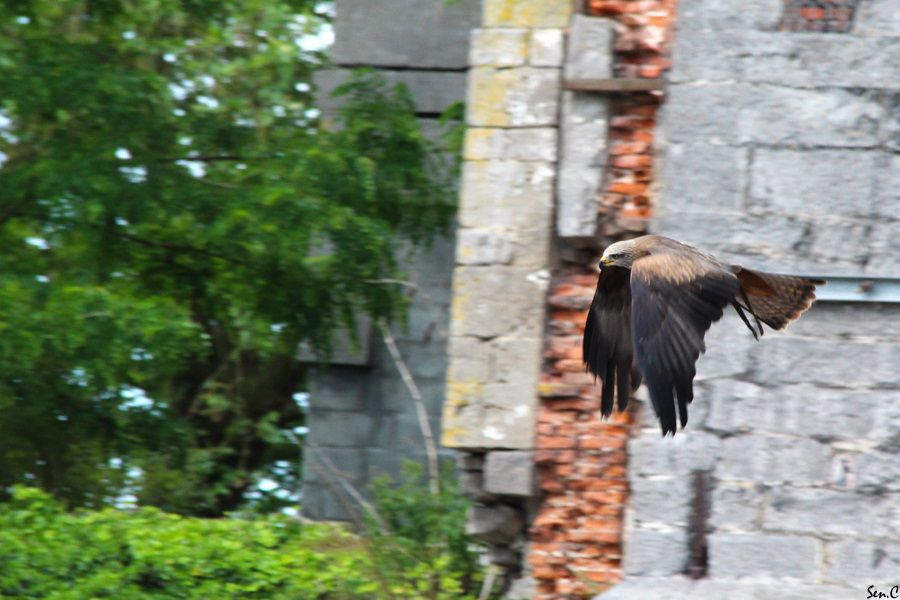 Pairi Daiza 2012 24-2