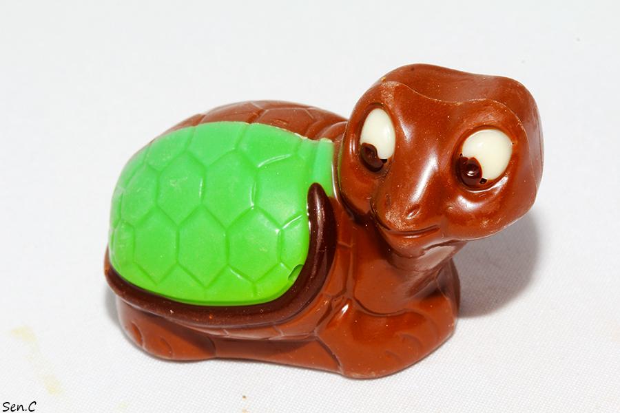 Tortue en chocolat IMG_3136