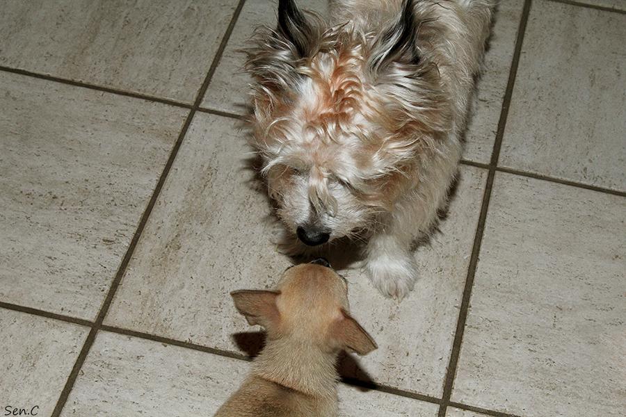 Nos petits chiens IMG_5256_zps3f2349fb