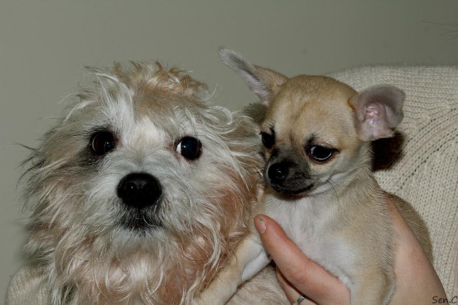 Nos petits chiens IMG_5271_zps809fee0e