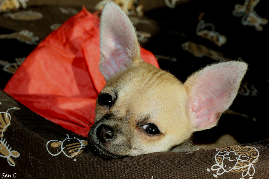 Nos petits chiens IMG_5349_zps1a814230