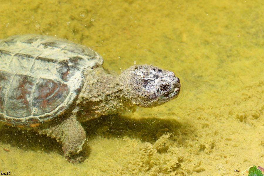 Alligator Bay 28-07-12 IMG_7810