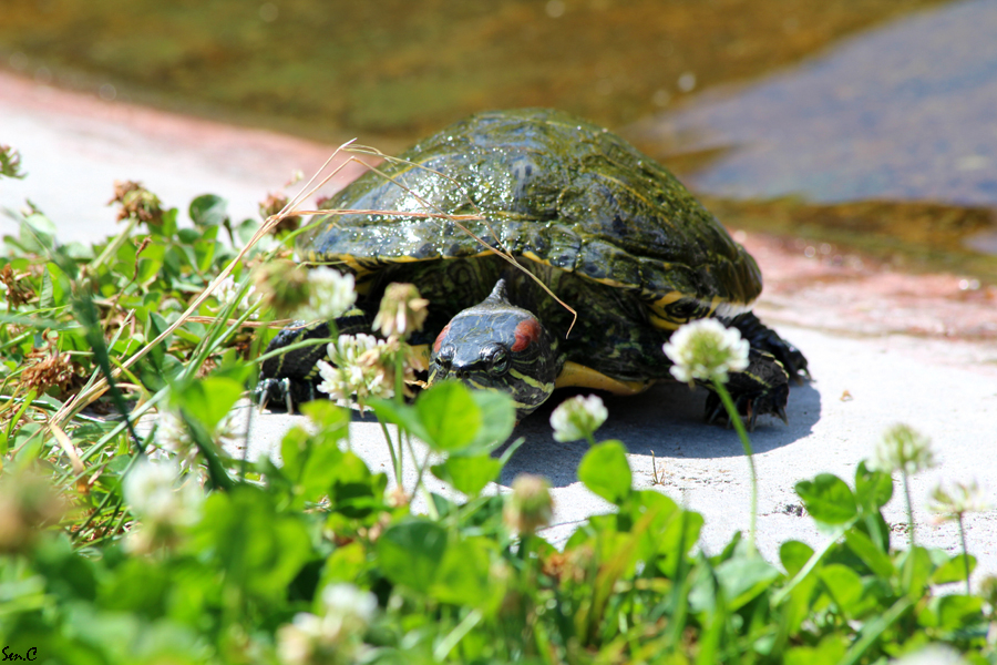 Alligator Bay 28-07-12 IMG_7849