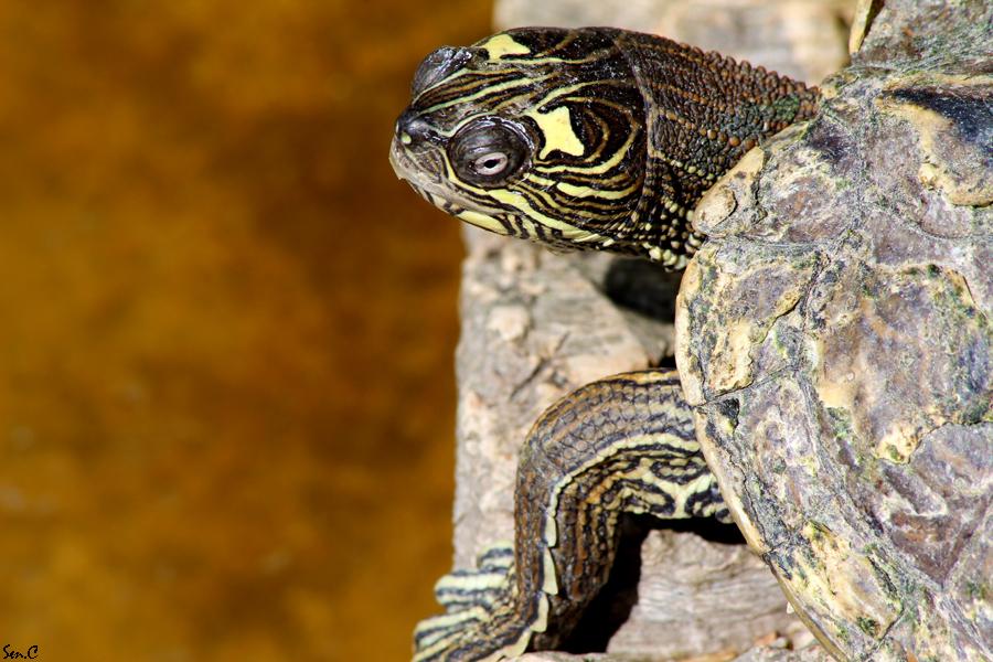 Alligator Bay 28-07-12 IMG_8150