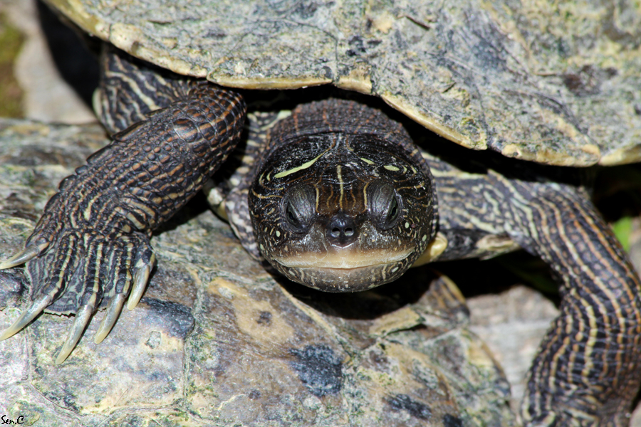 Alligator Bay 28-07-12 IMG_8163
