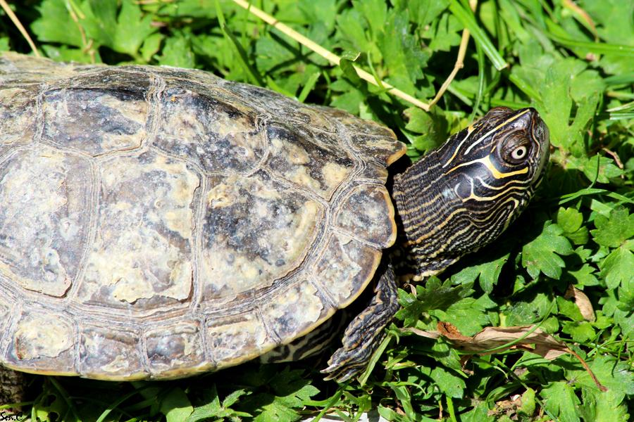 Alligator Bay 28-07-12 IMG_8187