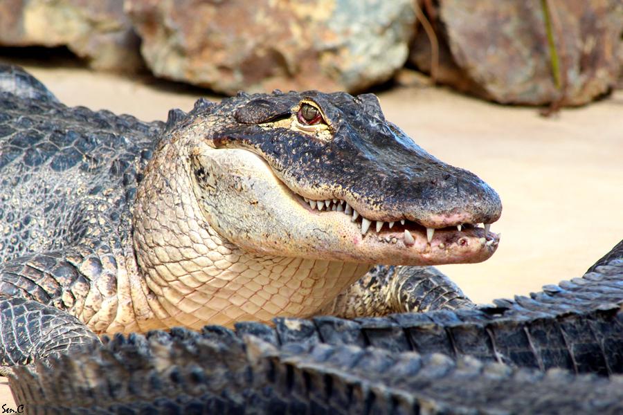 Alligator Bay 28-07-12 IMG_8488