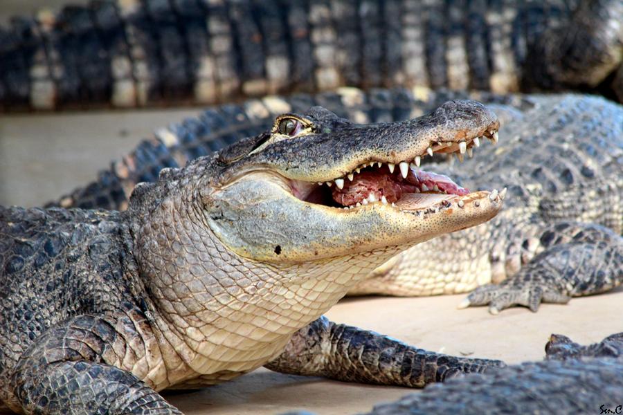 Alligator Bay 28-07-12 IMG_8514