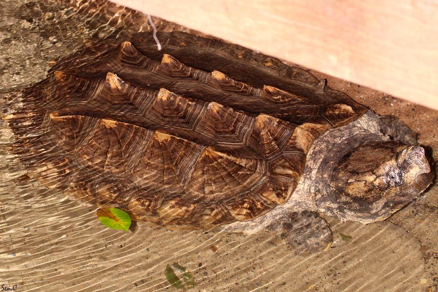 Alligator Bay 28-07-12 IMG_8633