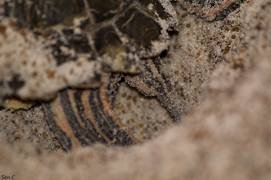 Mes tortues...(SEN.C) - Page 5 IMG_8879_zps3e966ed1
