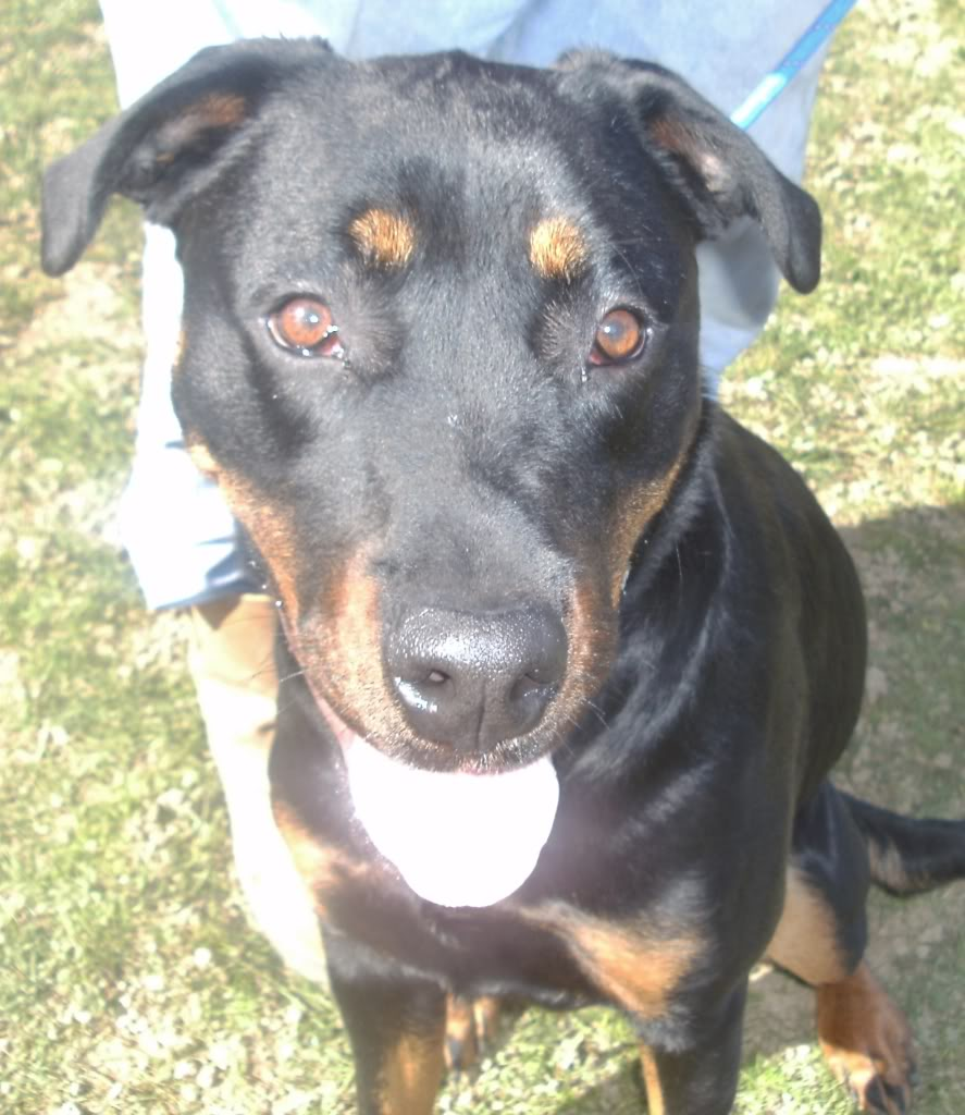 Bella - Rotti - HOMED PICT1350