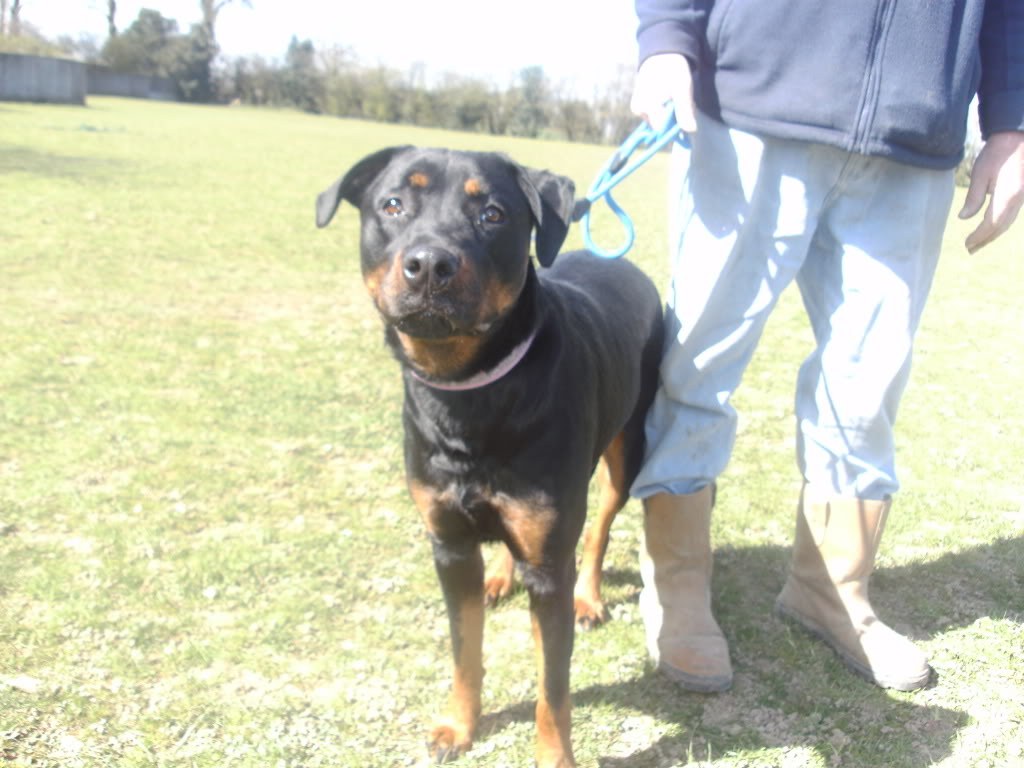 Bella - Rotti - HOMED PICT1352